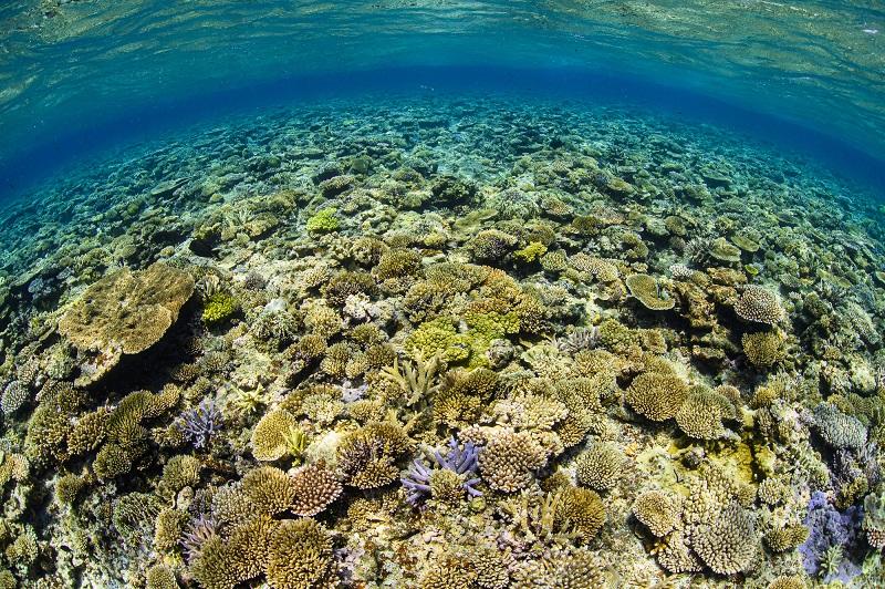 SNS投稿でサンゴの苗植え付けに貢献!「1Post 1Plant~サンゴの日フォトコンテスト2021~」作品募集中!