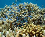 次の記事: 3月5日はサンゴの日!サンシャイン水族館がサンゴ保全活動を推