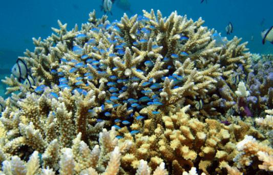 3月5日はサンゴの日!サンシャイン水族館がサンゴ保全活動を推進中