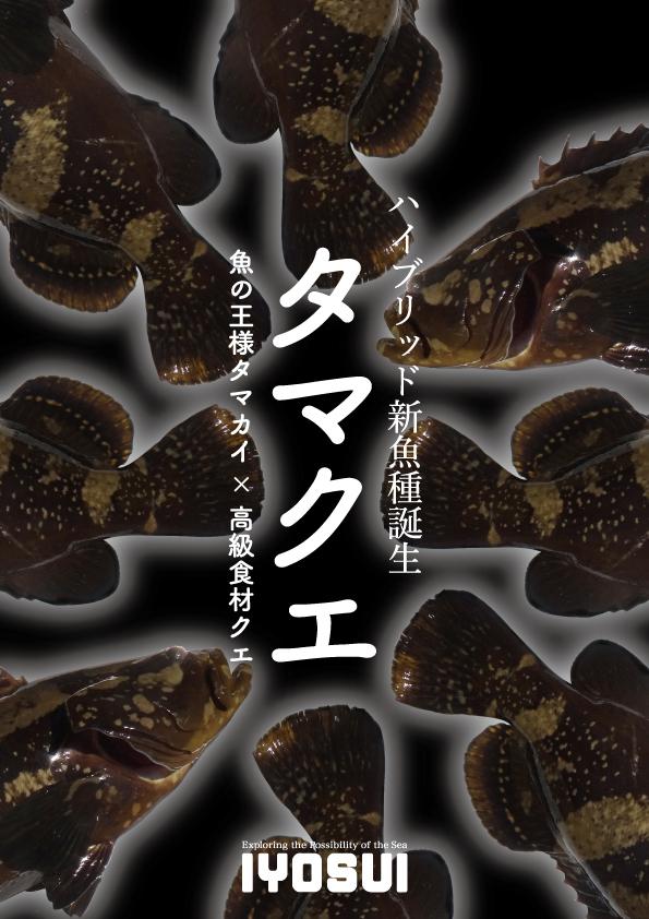 【生産者支援】高級魚「タマクエ」を食え!
