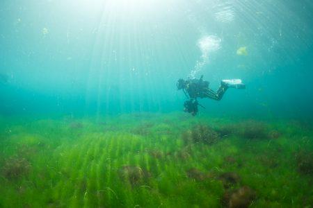 水底は芝生のように海藻が生える場所もある