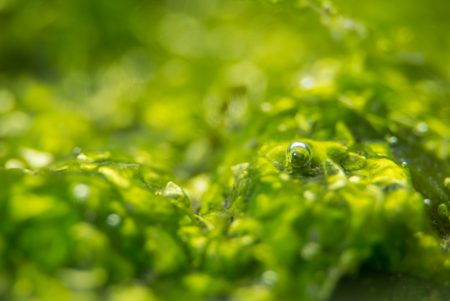 長水路内はマクロレンズでも海藻や小さな生き物を撮影できる