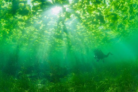 上下が海藻ワールド