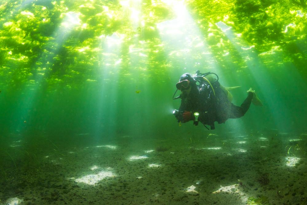 桜島を望む冬の鹿児島ダイビングは、360度グリーンな海藻ワールドだった!?