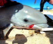 次の記事: 水族館なのにNPO?オーストラリアのイルカ保全施設の実態に迫