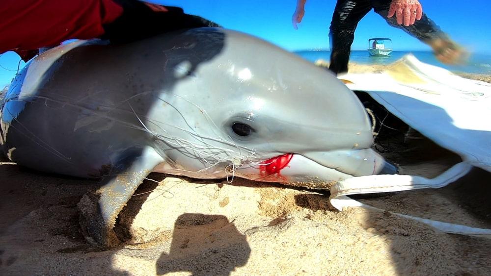 水族館なのにNPO?オーストラリアのイルカ保全施設の実態に迫る!後編