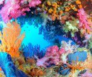 """次の記事: ⽔中写真家・茂野優太さんが、""""駿河湾""""をテーマにした水中写真"""