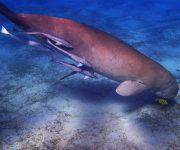 次の記事: 沖縄に残された2頭のジュゴンを守るために