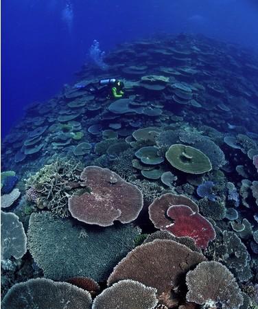 グレートバリアリーフ在住の海洋生物学者/ガイドが選ぶリーフスポット トップ10