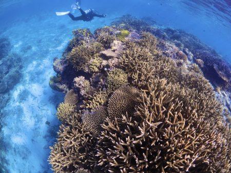 清水淳さん撮影の美しいサンゴ礁写真