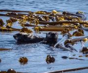 前の記事: 海の森「藻場」を育てて守ろう~ダイバーとしてできること~Vo