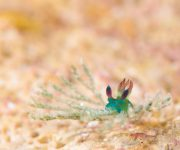 前の記事: ウミウシ連載第2回 「ウミウシの見つけ方」虎の巻