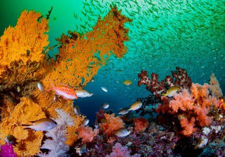 春濁りの一因となる海藻類イメージ写真