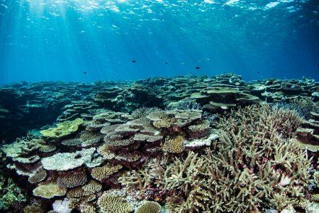 光の差すサンゴ礁