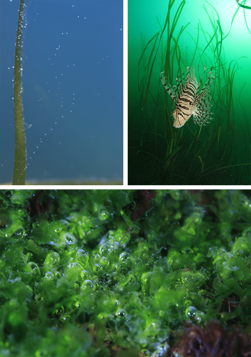なぜ、藻場が注目されるのか?