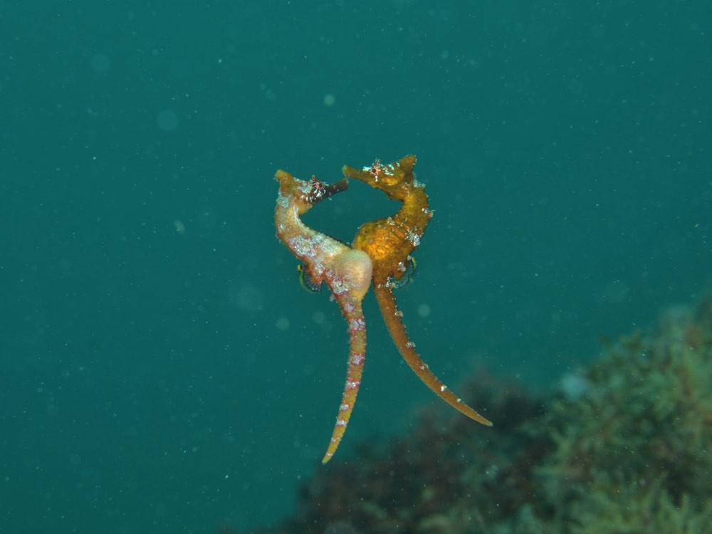 おもしろかわいい!海の生き物たちのちょっと変わった求愛方法をご紹介