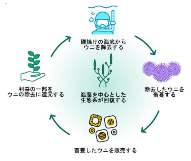 磯焼け対策の駆除ウニを育て販売、ウニノミクス社の藻場再生システムに注目