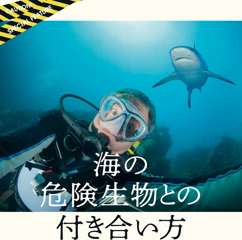 海の危険生物との付き合い方