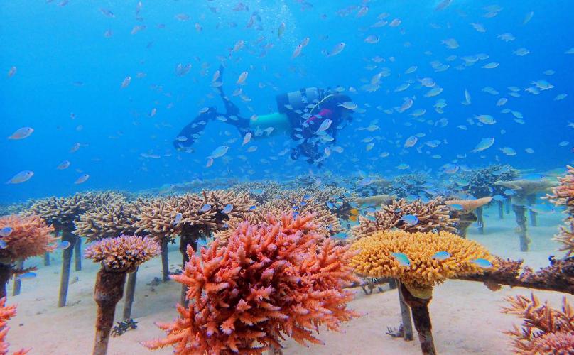 美しい沖縄の海の自然環境を次世代へと繋ぐ「サンゴの苗づくり体験」