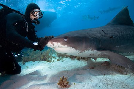 海の危険生物との付き合い方 DANJAPAN