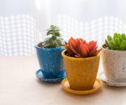 前の記事: 海洋プラスチックごみから生まれた植木鉢「buøy プランツポ