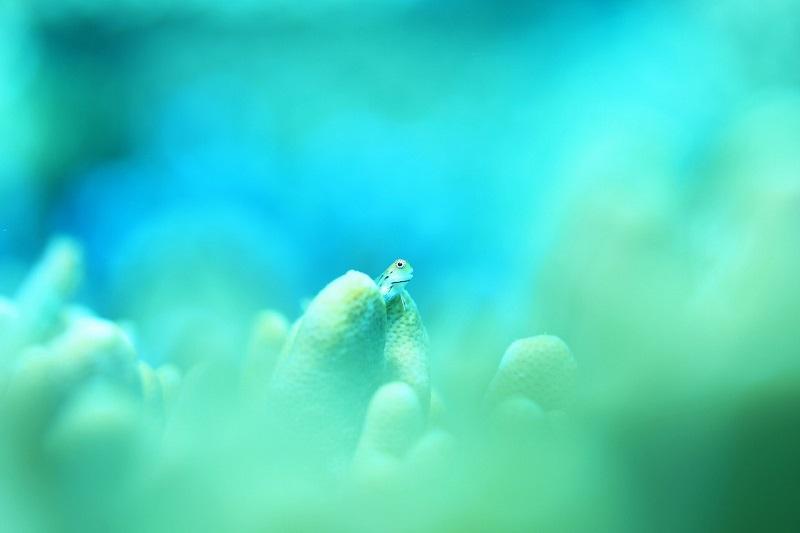水中写真家 阿部秀樹さんの超集中講座in石垣島