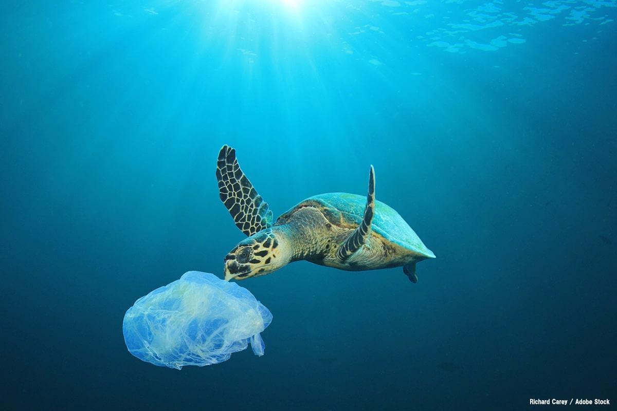 プラスチック誤食でウミガメなど動物が死亡。海のゴミ問題