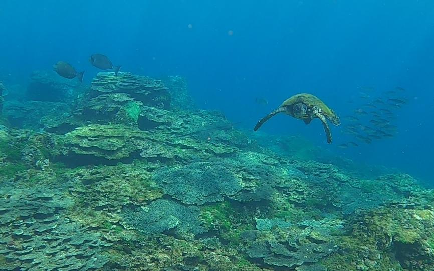 約半年でここまで回復!八丈島・底土海水浴場の白化サンゴ礁の今