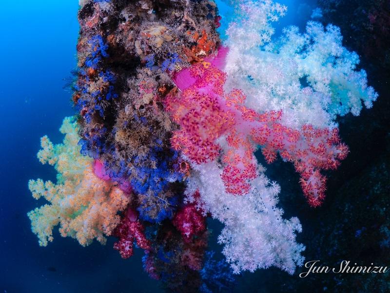 水中写真家の清水淳さんがオリンパスファン向けツアーを白浜で開催