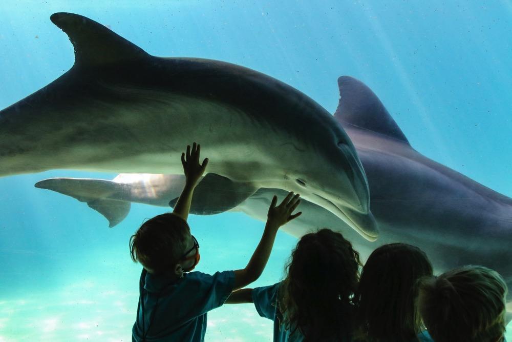 【ダイビング×環境教育】発見を学びへ!米発プロジェクト・ワイルドを紹介
