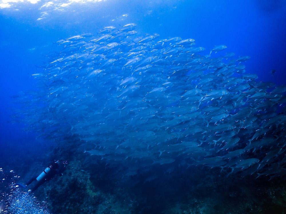 粟国島ダイビング