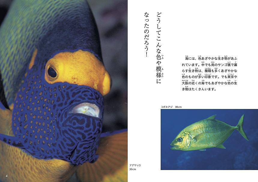 海洋写真家・吉野雄輔さん著「どうしてそうなった⁉海の生き物①」