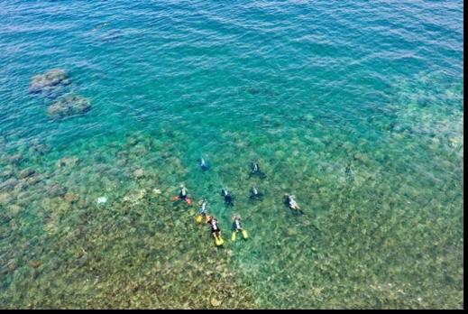 """サンゴ保全、ダイバー向け""""環境を学ぶコース""""がグリーン・フィンズで開始!"""