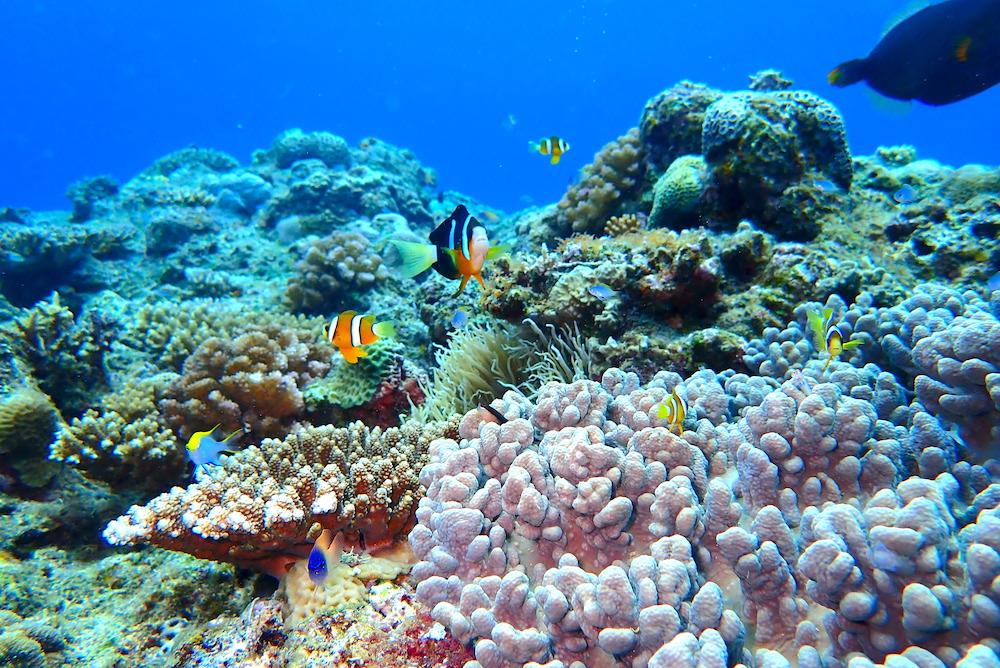 豊かなサンゴ礁にはさまざまな生物が