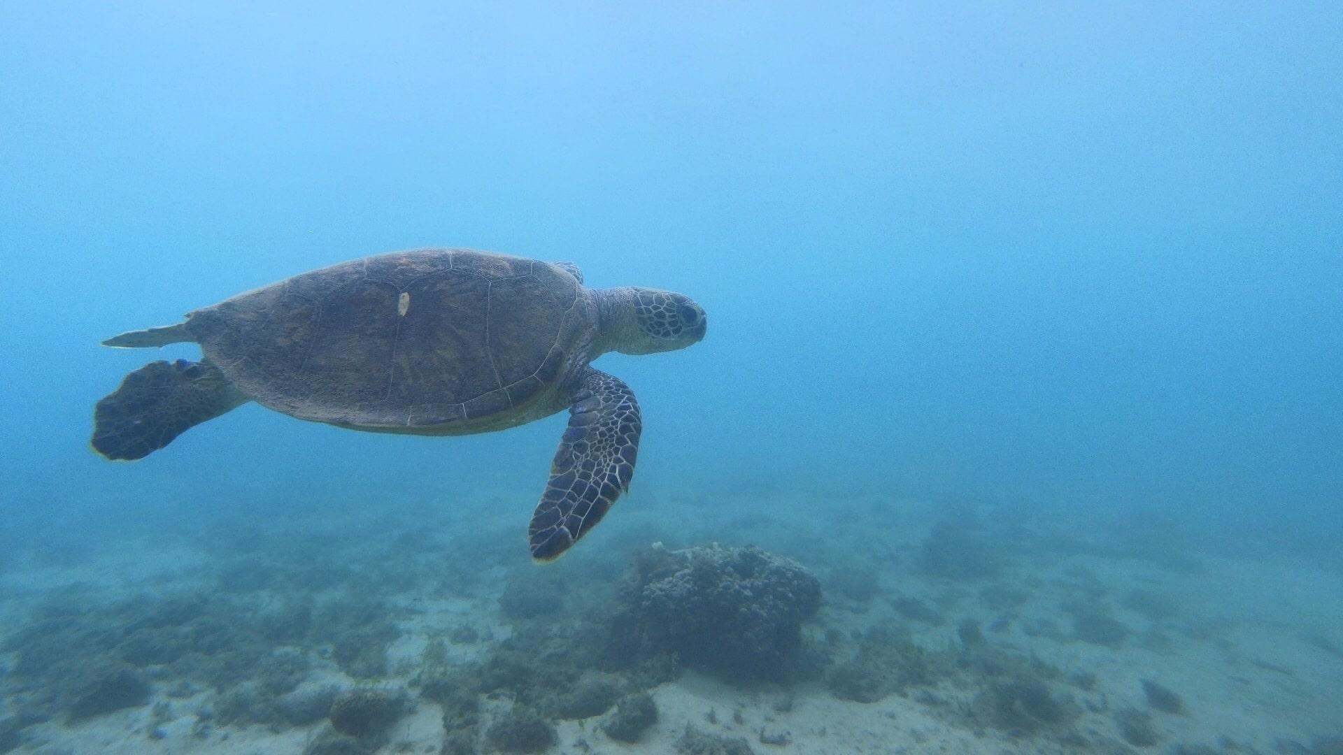 【奄美ダイビングログvol.3】ゴミを拾ったらウミガメに会えた嘘のような本当の話