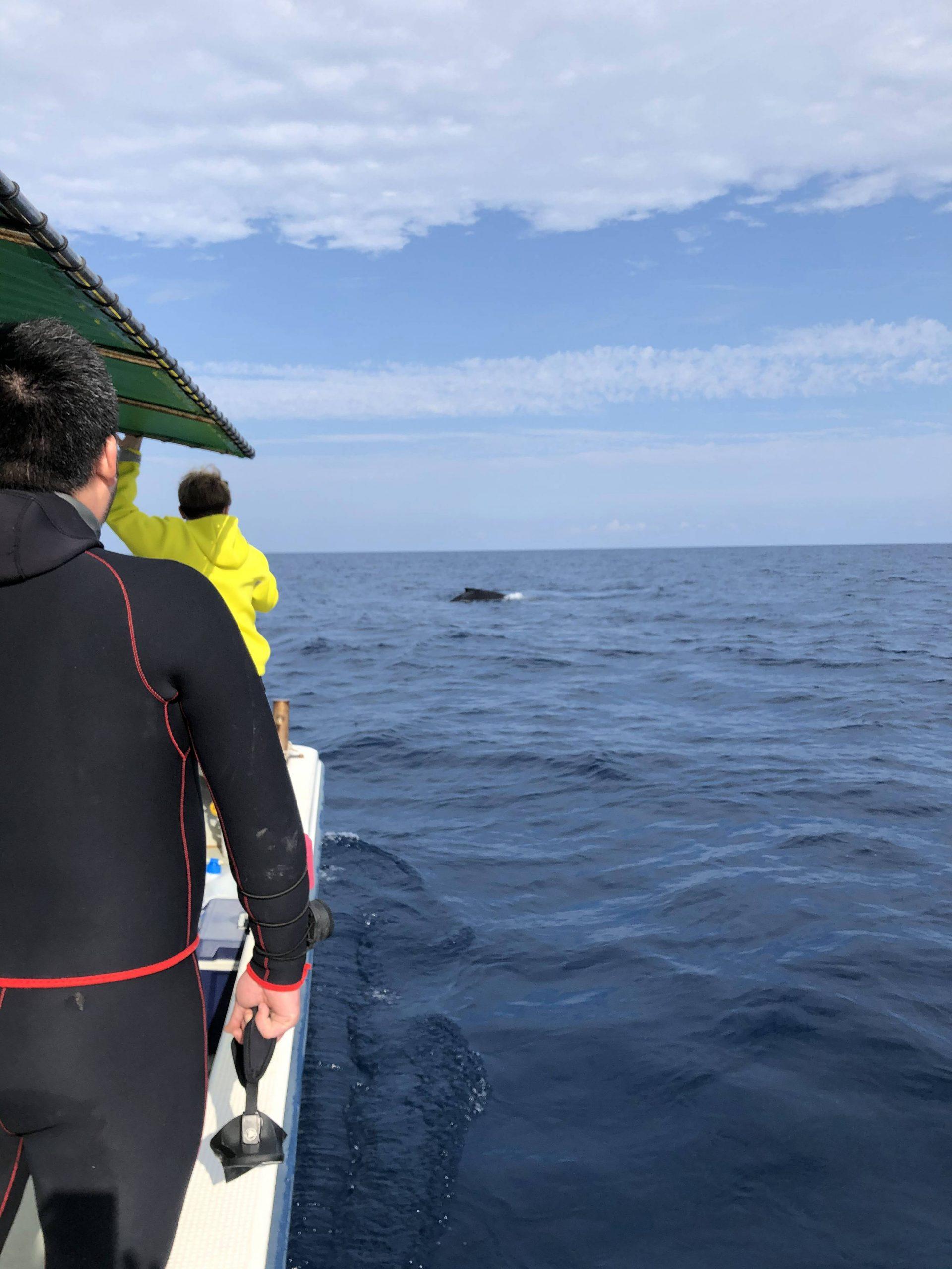 真栄田岬沖のクジラ