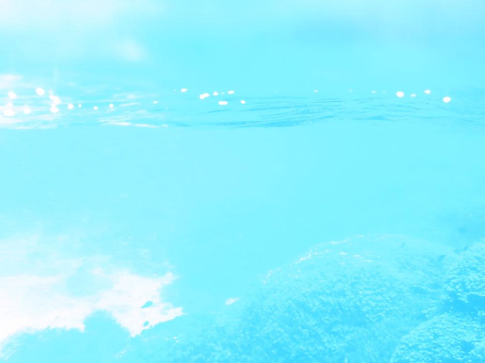 【水中写真家による海とダイビングのイベントまとめ】7月&8月編