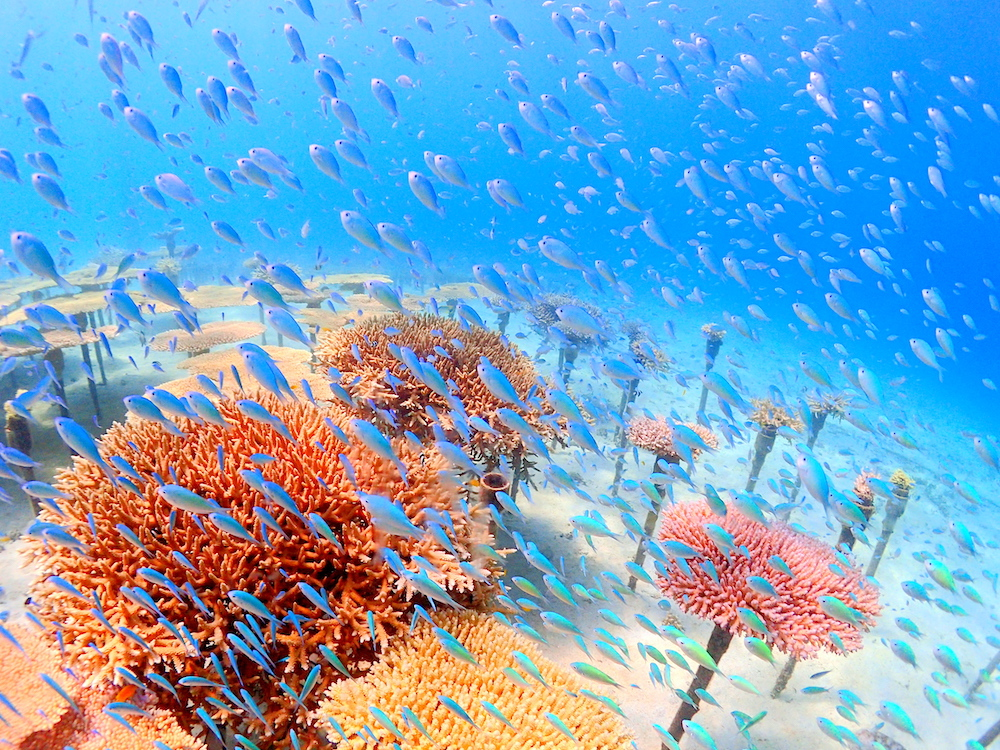 【恩納村】身近なサンゴが魅力!次世代に繋げる学びも【沖縄ダイビングサービスLagoon】