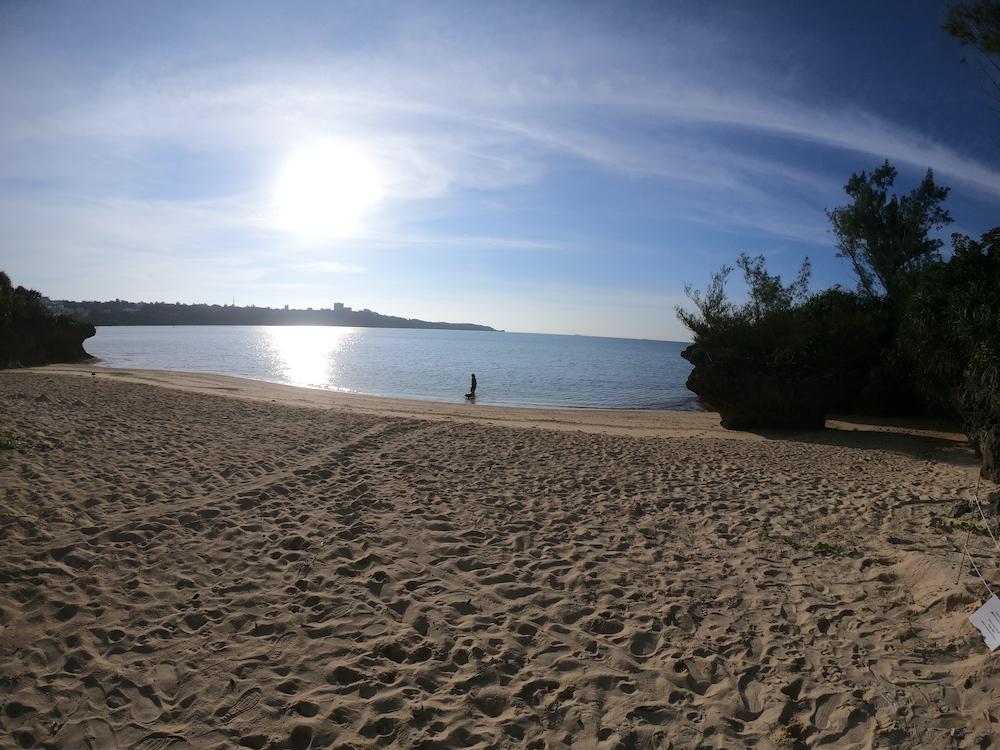 ウミガメが産卵しにくるビーチ