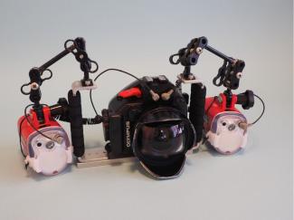 フラッシュ:UFL-3×2 カメラ:PEN Lite E-PL7 レンズ: LUMIX G FISHEYE 8mm/F3.5 防水プロテクター:PT-EP12 ポート:MP/FP8-91 グリップ:MP/MPBK-02 アーム:MP/MPアームSセット