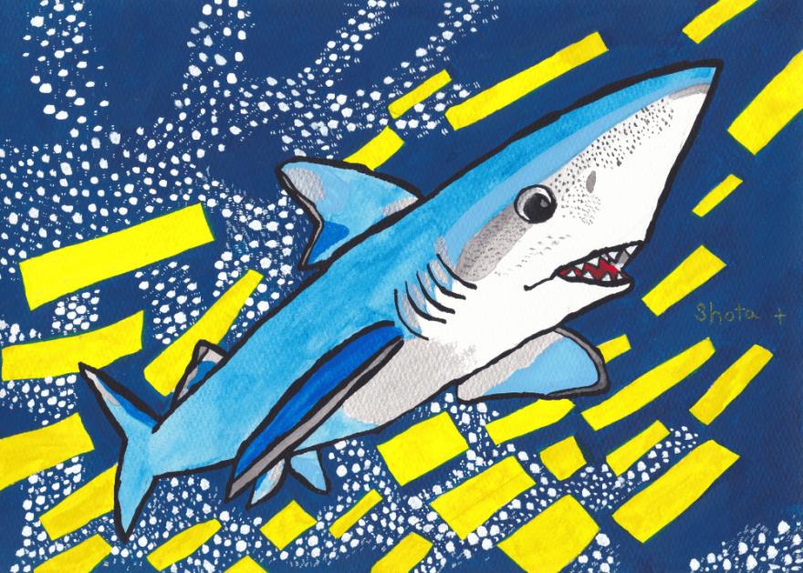 翔太くんが描いた鮮やかなインディゴブルーが特徴的なヨシキリザメ。