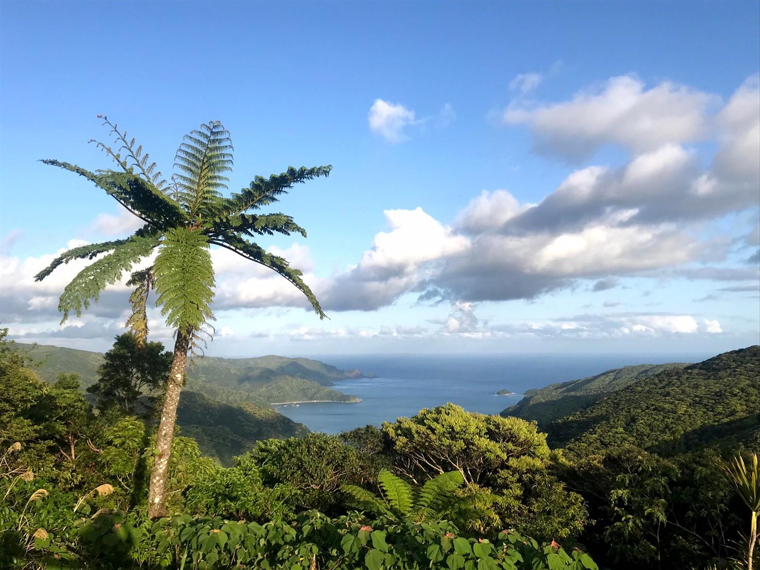 【奄美大島】世界自然遺産登録の理由とエリアを簡単解説!