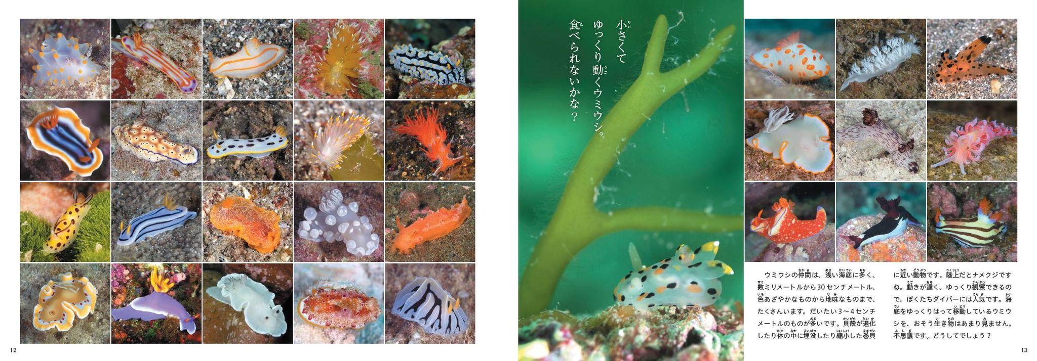 海洋写真家・吉野雄輔さん著「どうしてそうなった⁉海の生き物」