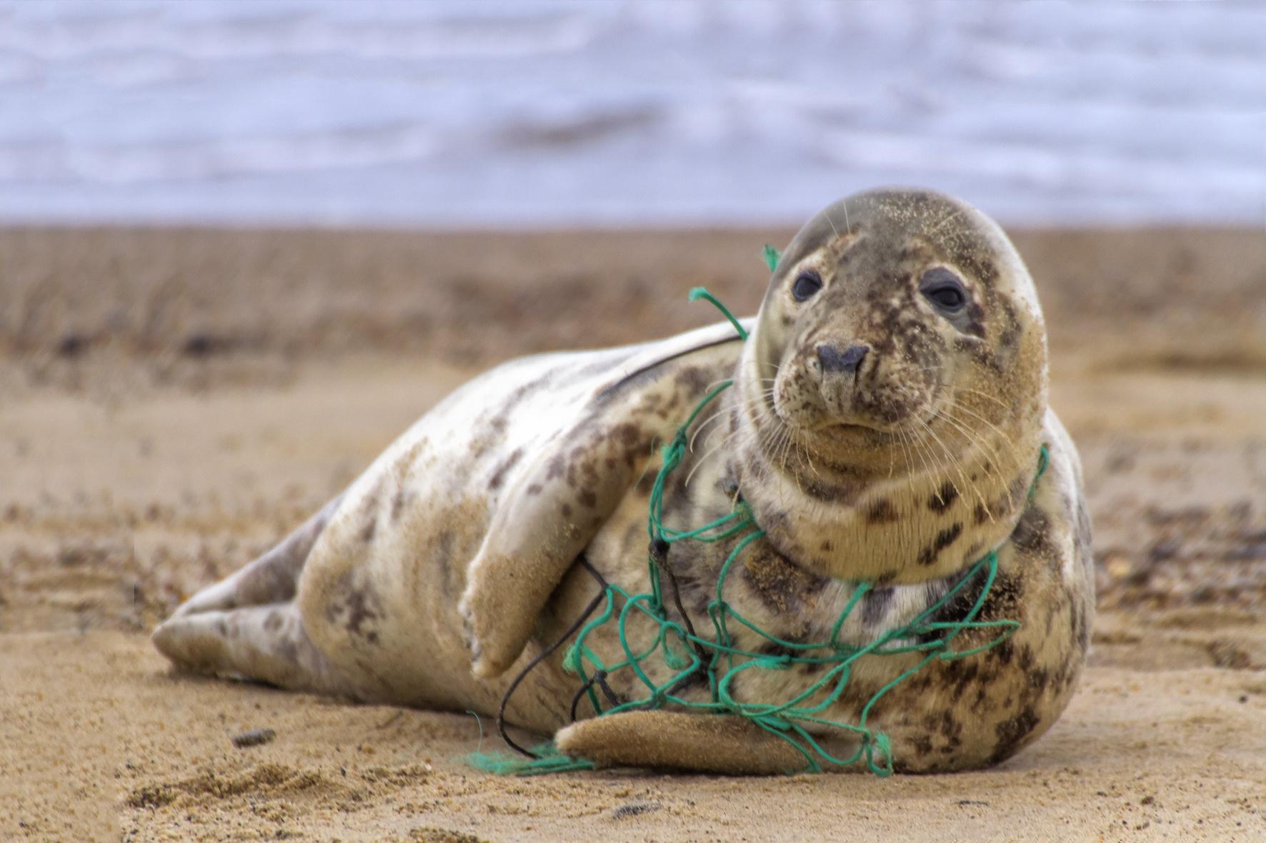 海の生き物に深刻な被害をもたらす漁具の海洋流出。改善に向け一歩前進