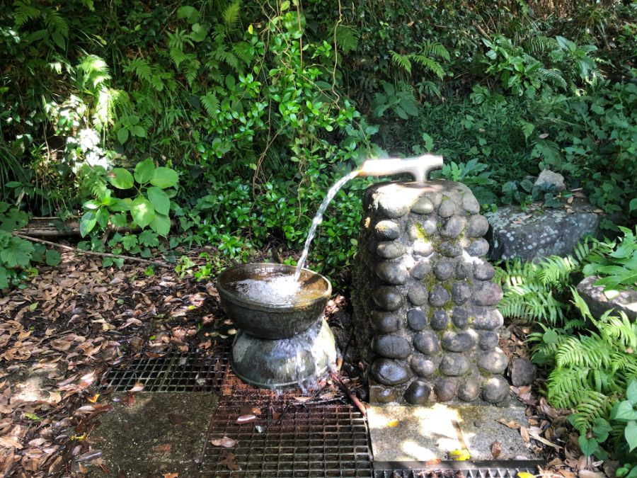 御蔵島の豊かな森の湧き水