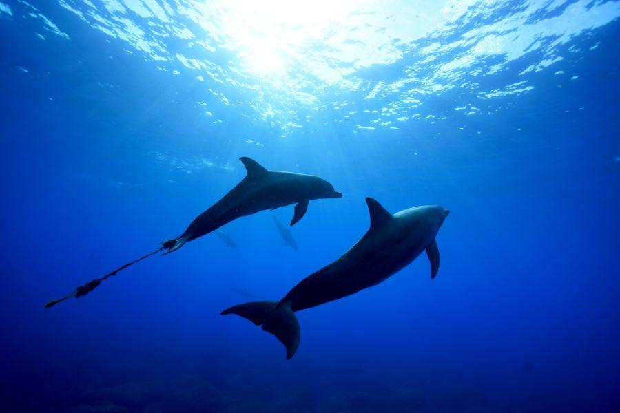 ロープが絡まったミナミハンドウイルカ