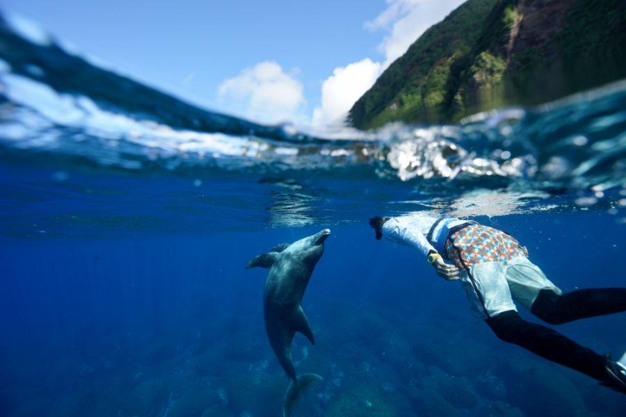 イルカガイドとミナミハンドウイルカ