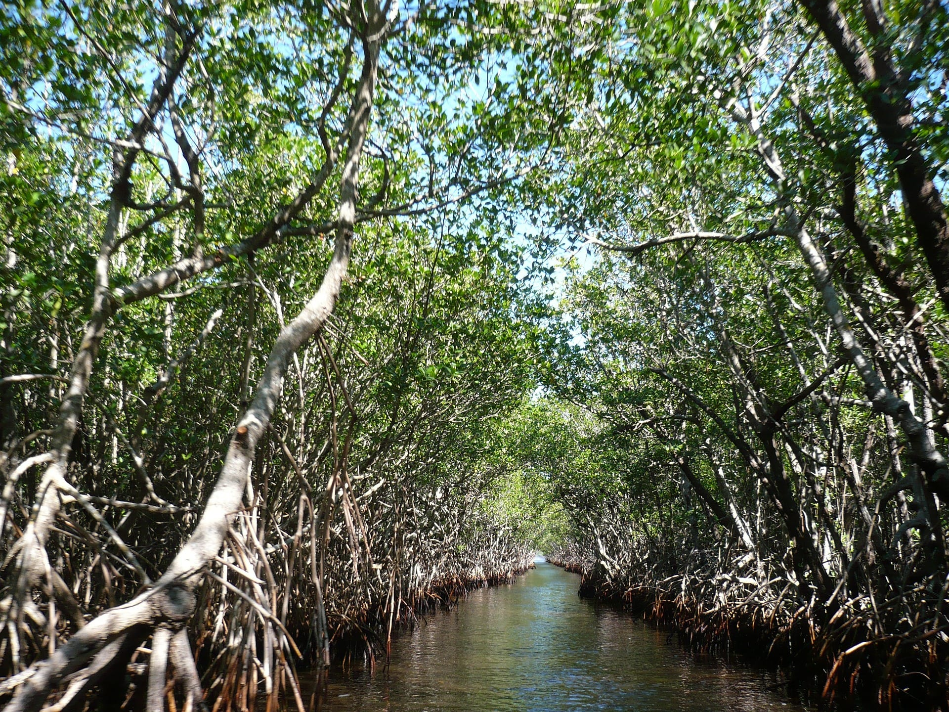 世界自然遺産登録地・西表島の未来を守るため財団を応援しよう!