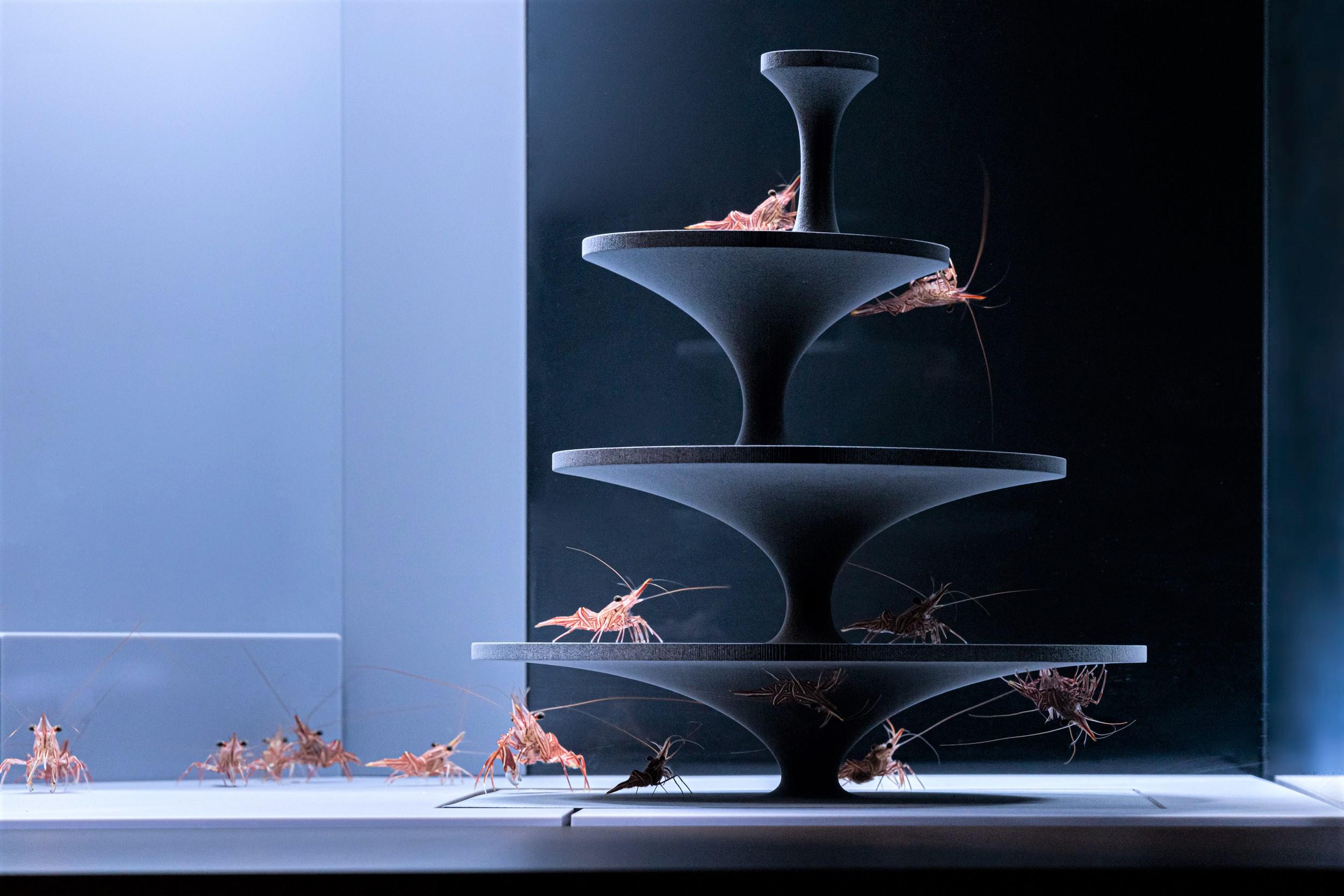 習性や生態からデザインされた企画展「カタチとくらし」が京都水族館にて開催中