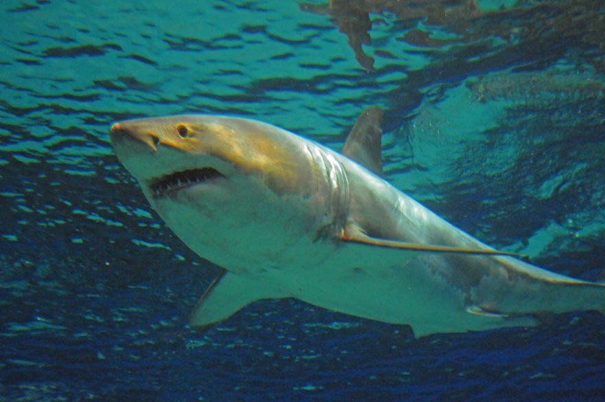 相次ぐサメの出没